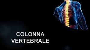 COLONNA VERTEBRALE ANATOMIA DELLA COLONNA VERTEBRALE 33 34