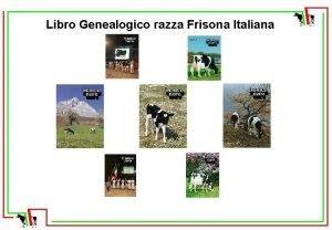Libro Genealogico razza Frisona Italiana Libro Genealogico razza