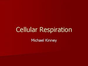 Cellular Respiration Michael Kinney What is cellular respiration