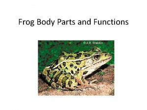 Frog Body Parts and Functions Anatomy of a