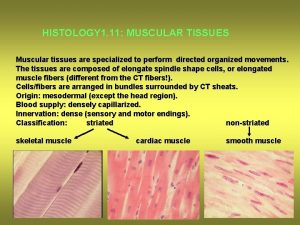 HISTOLOGY 1 11 MUSCULAR TISSUES Muscular tissues are