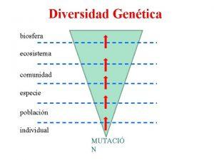 Diversidad Gentica biosfera ecosistema comunidad especie poblacin individual