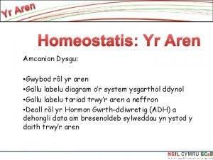Homeostatis Yr Aren Amcanion Dysgu Gwybod rl yr