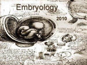 Embryology 2010 History of Embryology Aristotle 384 322