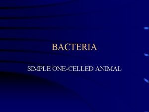 BACTERIA SIMPLE ONECELLED ANIMAL LISTERIA BACTERIA COCCI ROUND
