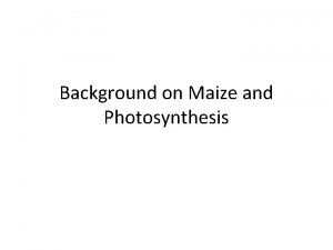 Background on Maize and Photosynthesis Corn or Maize