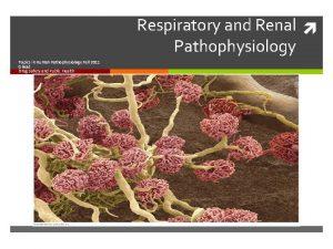 Respiratory and Renal Pathophysiology Topics in Human Pathophysiology