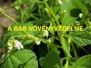 A BAB NVNYVDELME A BAB BETEGSGEI Babmozaik Bean