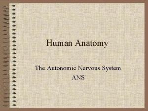 Human Anatomy The Autonomic Nervous System ANS ANS