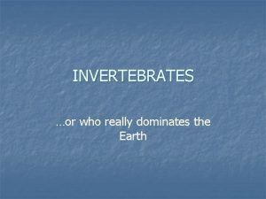 INVERTEBRATES or who really dominates the Earth Introduction