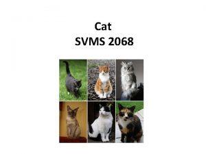 Cat SVMS 2068 Classification The cat Felis catus