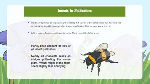 Insects in Pollination Insects dont pollinate on purpose