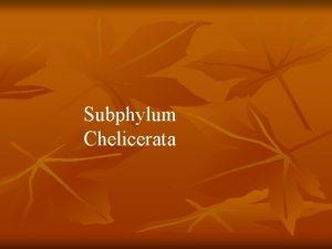 Subphylum Chelicerata Subphylum Chelicerata n n 70 000