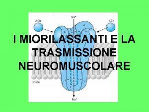I MIORILASSANTI E LA TRASMISSIONE NEUROMUSCOLARE LA TRASMISSIONE
