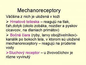 Mechanoreceptory Vina z nich je uloen v koi