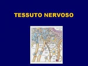 TESSUTO NERVOSO SCHEMA MORFOLOGICO DEL SISTEMA NERVOSO SUDDIVISIONE