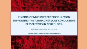 FINDING OF MYELIN ENERGETIC FUNCTION SUPPORTING THE AXONAL