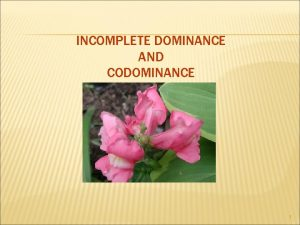 INCOMPLETE DOMINANCE AND CODOMINANCE 1 INCOMPLETE DOMINANCE Neither