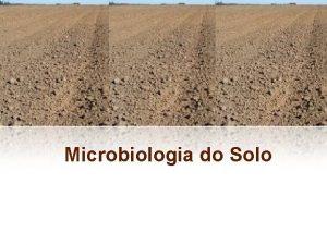 Microbiologia do Solo Introduo Solo maior reservatrio de