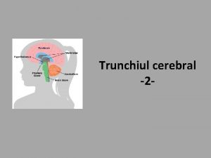 Trunchiul cerebral 2 Obiectivele cursului Nucleii echivalenti Structura