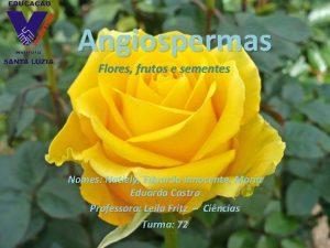 Angiospermas Flores frutos e sementes Nomes Natiely Eduardo