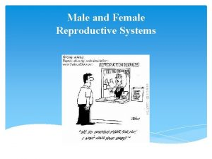 Male and Female Reproductive Systems Female Reproductive System
