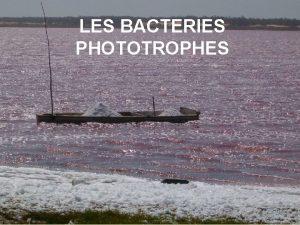 LES BACTERIES PHOTOTROPHES Programme Bactries phototrophes Les tudiants
