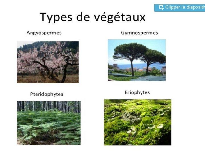 1 Les Bryophytes Gnralits Ce sont des vgtaux