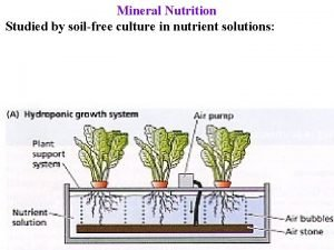 Mineral Nutrition Studied by soilfree culture in nutrient