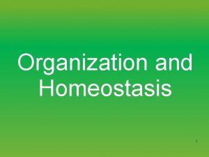 Organization and Homeostasis 1 Levels of biological organization