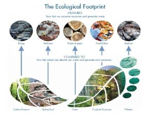 What are ecological footprints Ecological footprints measure the