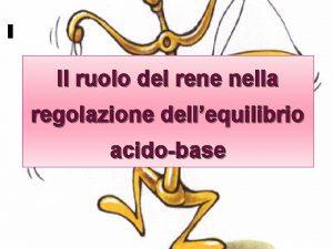 Acido Il ruolo del rene nella regolazione dellequilibrio