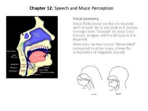 Chapter 12 Speech and Music Perception Vocal anatomy