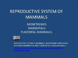 REPRODUCTIVE SYSTEM OF MAMMALS MONETREMES MARSUPIALS PLACENTAL MAMMALS