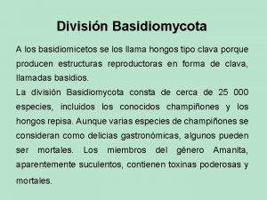 Divisin Basidiomycota A los basidiomicetos se los llama