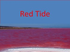 Red Tide What is Red Tide Red Tide