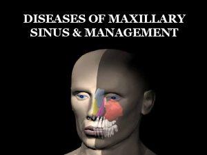 DISEASES OF MAXILLARY SINUS MANAGEMENT Development Anatomy Mucosalined
