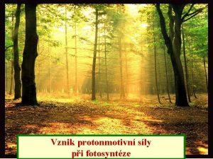 Vznik protonmotivn sly pi fotosyntze BENG Photo Srovnn