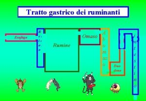 Tratto gastrico dei ruminanti Esofago R et ic