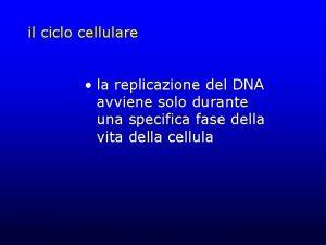 il ciclo cellulare la replicazione del DNA avviene