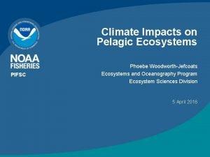 Climate Impacts on Pelagic Ecosystems PIFSC Phoebe WoodworthJefcoats