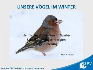 UNSERE VGEL IM WINTER Heimische Vogelarten im Winter