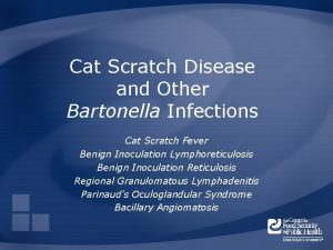 Cat Scratch Disease and Other Bartonella Infections Cat