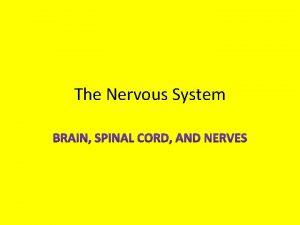The Nervous System Nervous tissue Nervous tissue The