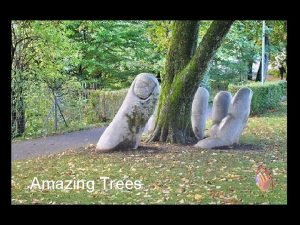 Amazing Trees Trees are the oldest and the