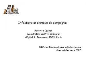 Infections et animaux de compagnie Batrice Quinet Consultation