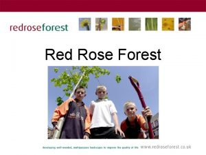 Red Rose Forest The origins of Red Rose
