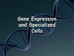 Gene Expression and Specialized Cells Multicellular Organisms Organisms