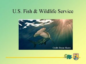 U S Fish Wildlife Service Credit Bryan Skerry