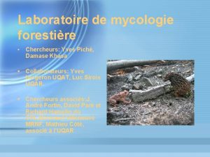 Laboratoire de mycologie forestire Chercheurs Yves Pich Damase